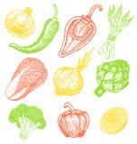 Ustalona ręka rysujący elementy z nakreślenie stylu świeżymi warzywami różni pieprze Karczoch i asparagus Apetyczni kolory Fotografia Royalty Free