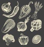 Ustalona ręka rysujący elementy z nakreślenie stylu świeżymi warzywami różni pieprze Karczoch i asparagus Kalafior, cebule Zdjęcia Stock