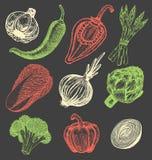 Ustalona ręka rysujący elementy z nakreślenie stylu świeżymi warzywami różni pieprze Karczoch i asparagus Kalafior, cebule Zdjęcie Stock