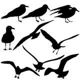 Ustalone czarne sylwetki seagulls na bielu Zdjęcie Stock
