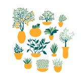 Ustalone ogrodowe rośliny w garnkach Ogrodnictwo i horticulture ilustracja wektor