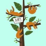 Ustalony Śliczny śmieszny opieszałości obwieszenie na drzewie Śpiący i szczęśliwy Urocza ręka rysująca kreskówki zwierzęcia ilust ilustracji