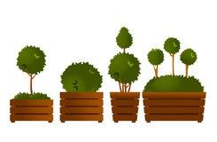 Ustalony ogrodowy topiary ilustracji