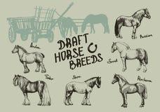 Ustalony rolny koń, hrabstwo, druciarz, rosjanin, sowieci, perszeron, Arden ilustracja wektor
