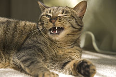 ustanowienie kota obrazy royalty free