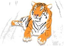 ustanowienie tygrysa Zdjęcie Royalty Free