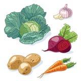 ustawić warzywa Obraz Stock