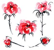ustawiać czerwone róże Fotografia Stock