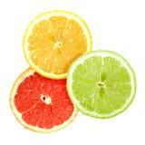 ustawiać przecinające cytrus owoc Fotografia Royalty Free