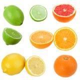 ustawiać cytrus owoc Fotografia Royalty Free