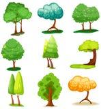ustawia drzewa Obrazy Royalty Free