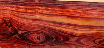 Ustawia Egzotycznego drewnianego reala dla pustego miejsca pi?ra zdjęcie royalty free