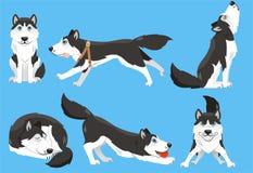 Ustawia husky ilustracji