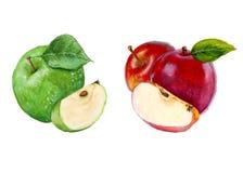 Ustawia jabłka odosobniony beak dekoracyjnego latającego ilustracyjnego wizerunek swój papierowa kawałka dymówki akwarela ilustracji