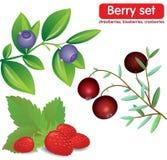 Ustawia jagody, czarne jagody, truskawki, cranberrie Obrazy Stock
