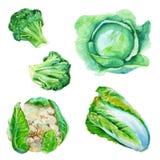 Ustawia kapusty Kapusta, brokuły, kalafior, Chińska kapusta Jest royalty ilustracja