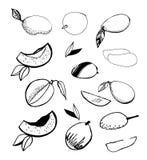 Ustawia mango Obraz Stock