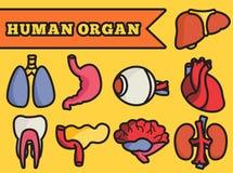 Ustawia płaskiego ludzkich organów ikon ilustraci pojęcie ilustracja wektor
