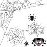 ustawia pająk sieć Zdjęcie Royalty Free