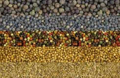 Ustawia pikantność horyzontalnego rząd suchych ziaren kolenderów mieszanki pieprzy menchii zieleni koperkowy biały i fragrant cza Obraz Stock