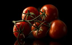 ustawia pomidory Fotografia Royalty Free