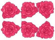 Ustawia róża kwiatu klamerki sztukę obraz royalty free