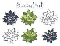 Ustawia tłustoszowatej rośliny w pustynnej kolekcji royalty ilustracja