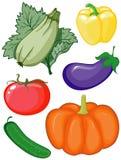 ustawia warzywa Fotografia Stock