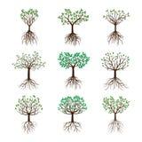 Ustawia wiosen drzewa z liśćmi i korzeniami ilustracja wektor
