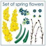Ustawia wiosna kwiaty Zdjęcie Stock