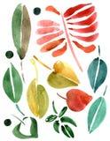 Ustawiający jesień liść royalty ilustracja