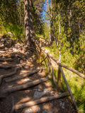 ustawiona lasowa ślad ścieżka w Olympus parku narodowym Zdjęcie Stock