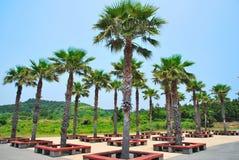 ustawiony koks starannie wiosłuje drzewa tropikalnych fotografia royalty free