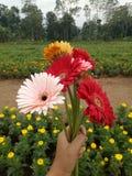 Usted le gusta una flor Fotos de archivo