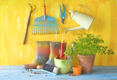 Ustensiles de jeune usine et de jardinage Images stock