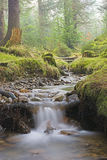Ustione della foresta fotografia stock libera da diritti