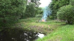 Ustione delle fiamme del fuoco vicino agli alberi forestali sulla riva del lago dello stagno di estate 4K archivi video