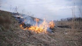 Ustioni asciutte dell'erba a lamella sul fiume Catastrofe ecologica L'incendio ed il fumo distruggono tutta la vita stock footage