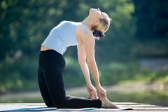 Ustrasana Pose Royalty Free Stock Photography