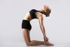 Ustrasana Pose Royalty Free Stock Image