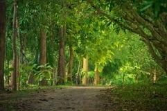 Ustronny lasowy pas ruchu. Zdjęcia Royalty Free