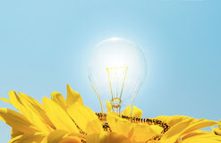 Usual lamp in sunflower Royalty Free Stock Photo