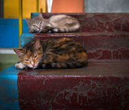 Usual life. Cats. Stairs. Royalty Free Stock Photography