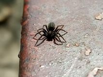 Usual little spider royalty free stock photos