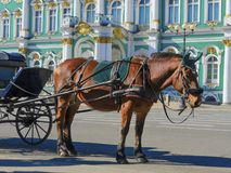 Old Retro Carriage in Front of Winter Palace Hermitage Museum on Palace Square in St. Petersburg, Russia. Historical Old- stock photo