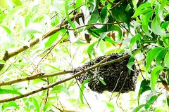 Usually, the bees build their nests high in the trees. stock images