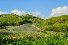 Usurpe en bosques en la montaña en Tailandia Fotos de archivo