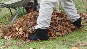 Usuwać spadać liście zdjęcie wideo