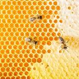 Uszczelneni honeycombs Pszczoła kraul na honeycomb Zdjęcie Royalty Free