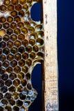 Uszczelniony Ulowy Honeycomb wzór i wosku wnętrze Zdjęcie Stock